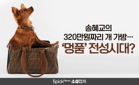 송혜교의 320만원짜리 개 가방···'멍품' 전성시대?